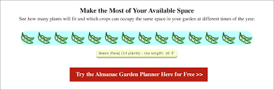 Green Bean Growth Chart Beans Planting Growing And Harvesting Bean Plants The