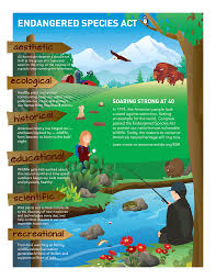 extinction of animals essay protecting the species act species  protecting the species act species coalition species act infographic click to enlarge