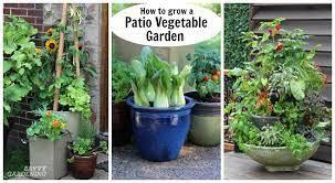 patio vegetable garden setup and tips