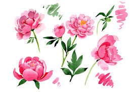 A step by step paper flower tutorial. Raspberry Red Peonies Flower Watercolor Graphic By Mystocks Creative Fabrica