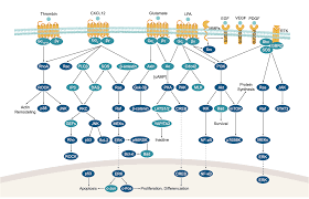 Gpcr Signaling Apexbio Gpcr G Protein Signaling Pathways