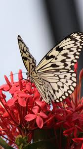 Butterfly Cute Flower Wallpapers For Mobile