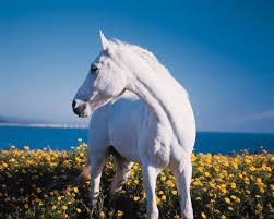 white horse face side. Plain Face White_horse_black_bak For White Horse Face Side S