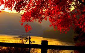 fall nature backgrounds. Beautiful Autumn Leaves Pictures For Desktop. Fall Nature Backgrounds