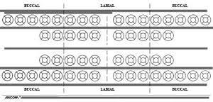 Item 50 0540 Schematic Dental Chart Sticker