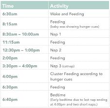 Schedules For Babies Margarethaydon Com