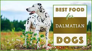 9 Best Healthiest Dog Food For Dalmatians In 2019