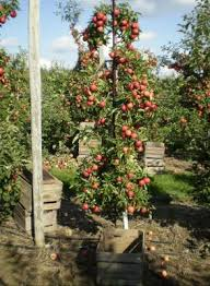 How To Protect Your Fruit From Animals Eating It Protecting Fruit When Do You Plant Fruit Trees