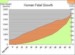 Human Fetal Growth Chart Fetal Development Embryology