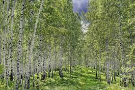 More Trees Than There Were 100 Years Ago Its True Mnn Mother