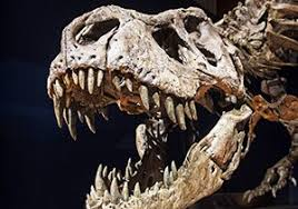 10 terrifying <b>T Rex</b> facts! | National Geographic Kids