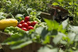 home garden with fruits and vegetables