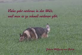 Verein Für Deutsche Schäferhunde Og Wegscheid Ev