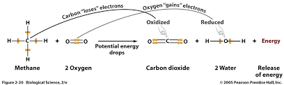 redox scheme of the reaction of methane and oxygen