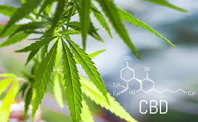Why You Need To Be Serious About What Is The Best CBD Oil