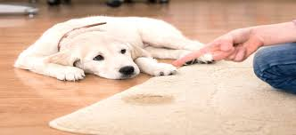 fast and effective pet urine carpet cleaning for orange villa park yorba linda anaheim hills and nearby cities
