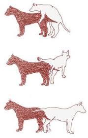 hund und mensch paarung