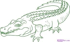 Small Picture Sketch Of A Crocodile Crocodile Drawingjpg Coloring Pages Maxvision