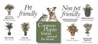 View Larger Image Pet-friendly plants, toxic plants for pets, dangerous indoor  plants