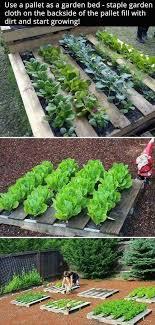 20 simple vegetable garden ideas