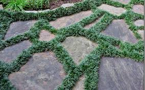 patio stones with grass in between. Contemporary Stones Plants For Use Between Stepping Stones And Pavers And Patio With Grass In V