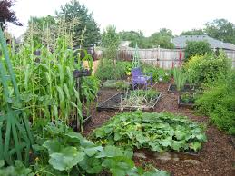 pinning up a vegetable garden