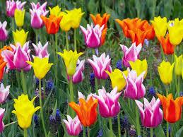 garden flowers. Color Mood Of A Garden Flowers I