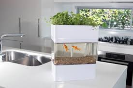 aquaponic gardening. aquaponicals-aquaponic-gardening-system aquaponic gardening