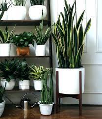 home decorative indoor plant pots terrarium design large with regard to planters ideas square garden uk large decorative flower pots