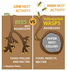 ground dwelling bees ground nesting bees why you should let these bees nest in your