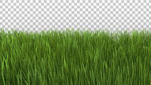 grass.  Grass Play Preview Video In Grass R