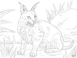 Small Picture Caracal Desert Wild Cat coloring page Free Printable Coloring Pages