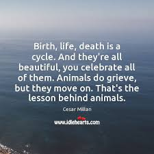 Celebration Of Life Quotes Death Simple Birth Life Death Is A Cycle And They're All Beautiful You Celebrate