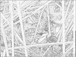 Free Animal Camouflage Coloring Pages Within Plasticultureorg
