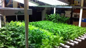 indoor hydroponic vegetable garden. Indoor Hydroponic Vegetable Garden Advanced Nutrients