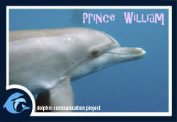 adopt a dolphin prince william