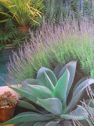 Small Picture Best 25 Succulent landscaping ideas only on Pinterest Succulent