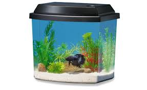 Decorative Betta Fish Bowls