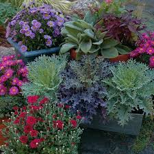 container garden picture of grouping of fall container gardens