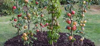 Backyard Orchard Culture  Deep Green PermaculturePlanting A Fruit Tree