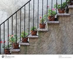 Diese art von dekoration hilft euch dabei, die grenzen zwischen flur und wohnbereich im idealfall verschwimmen zu lassen und bietet euch ein wohnliches, modernes. Treppenblumen Ein Lizenzfreies Stock Foto Von Photocase