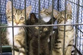 animal shelter kittens. Contemporary Shelter Kittens Available For Adoption For Animal Shelter