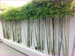 Small Picture Outdoor Bamboo Plants Decor Pinterest Bamboo plants Plants