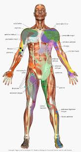 Trigger Point Chart I Need To Try Trigger Points Massage