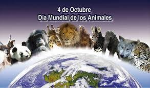 Resultado de imagen de dia internacional de los animales