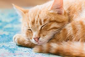 Why Do Cats Sleep So Much? 5 Facts About Sleeping Cats - Catster