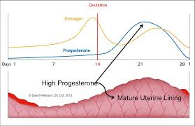 Progesterone And Estrogen Levels