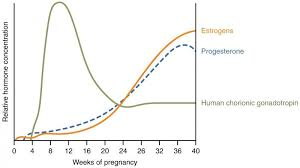 Estrogen And Progesterone Levels In Pregnancy Chart Pin On Baby