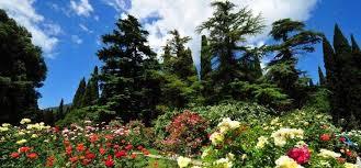 Никитский ботанический сад Все о Крыме Фото Никитский ботанический сад
