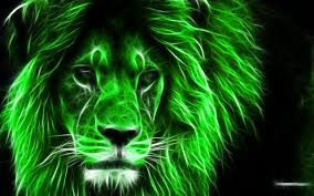 1280x800 stunning hd quality pics of lion hd full hd 1080p desktop pics